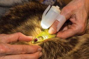TipSee Light TickSee Tick Removal Kit